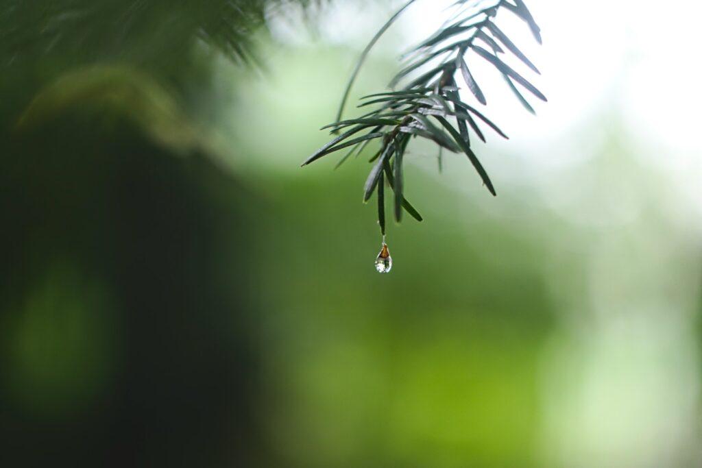 water dew on green leaf